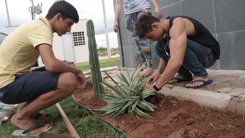 O grupo catalogou as plantas típicas do bioma na região