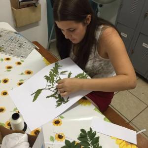 plantas-medicinais-17
