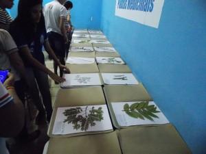 plantas-medicinais-8
