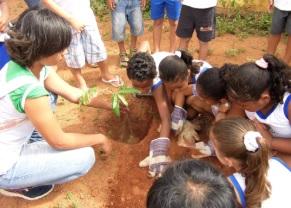 seis_crianças_e_uma adulta_plantando_uma_multa