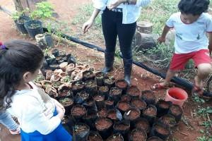 Estudantes e professora observam mudas plantadas