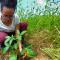 Jovens propõem alternativa para proteger nascente do Rio Ipojuca (PE)