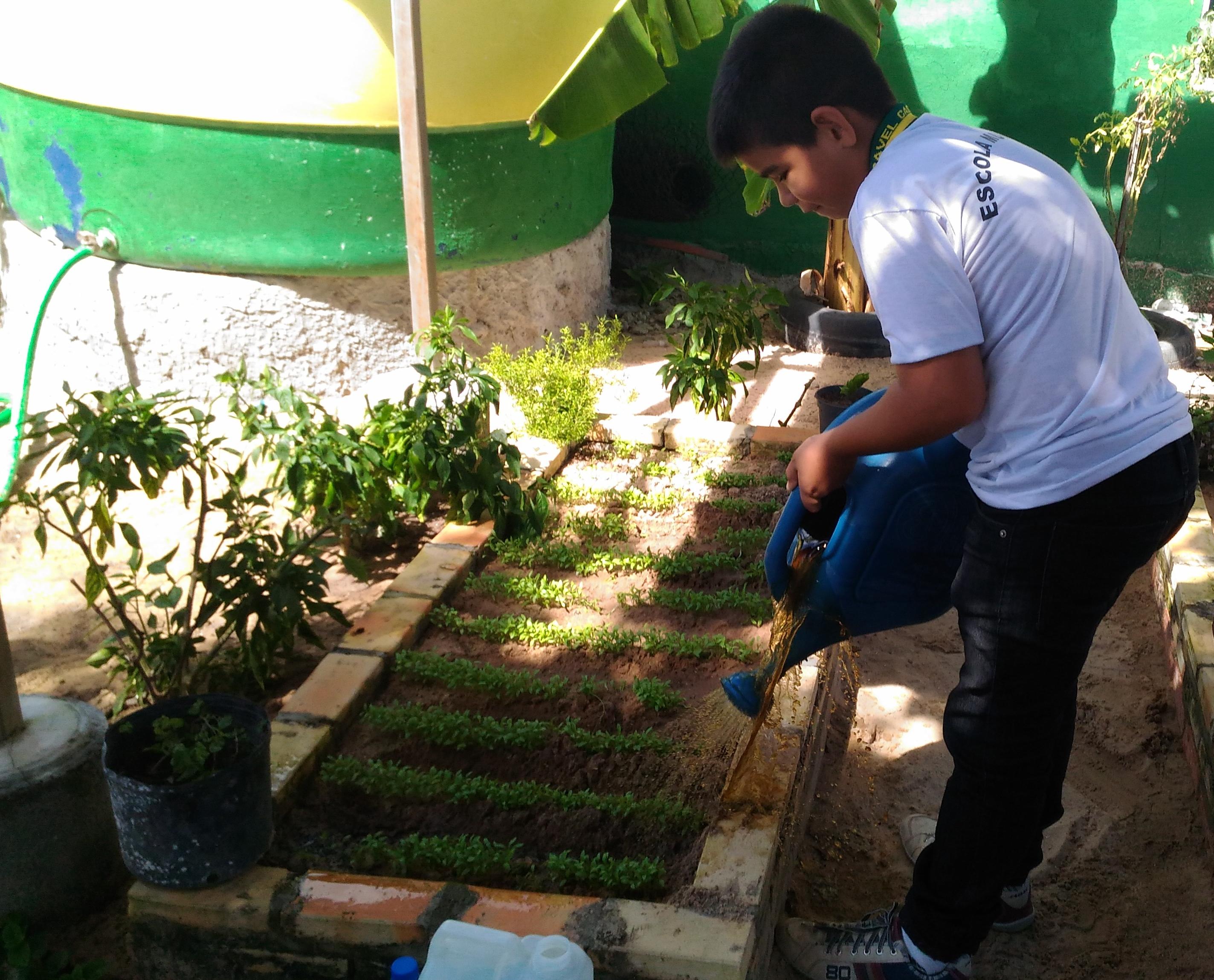 Projeto Biofertilizante líquido natural, finalista no Desafio Criativos da Escola 2019
